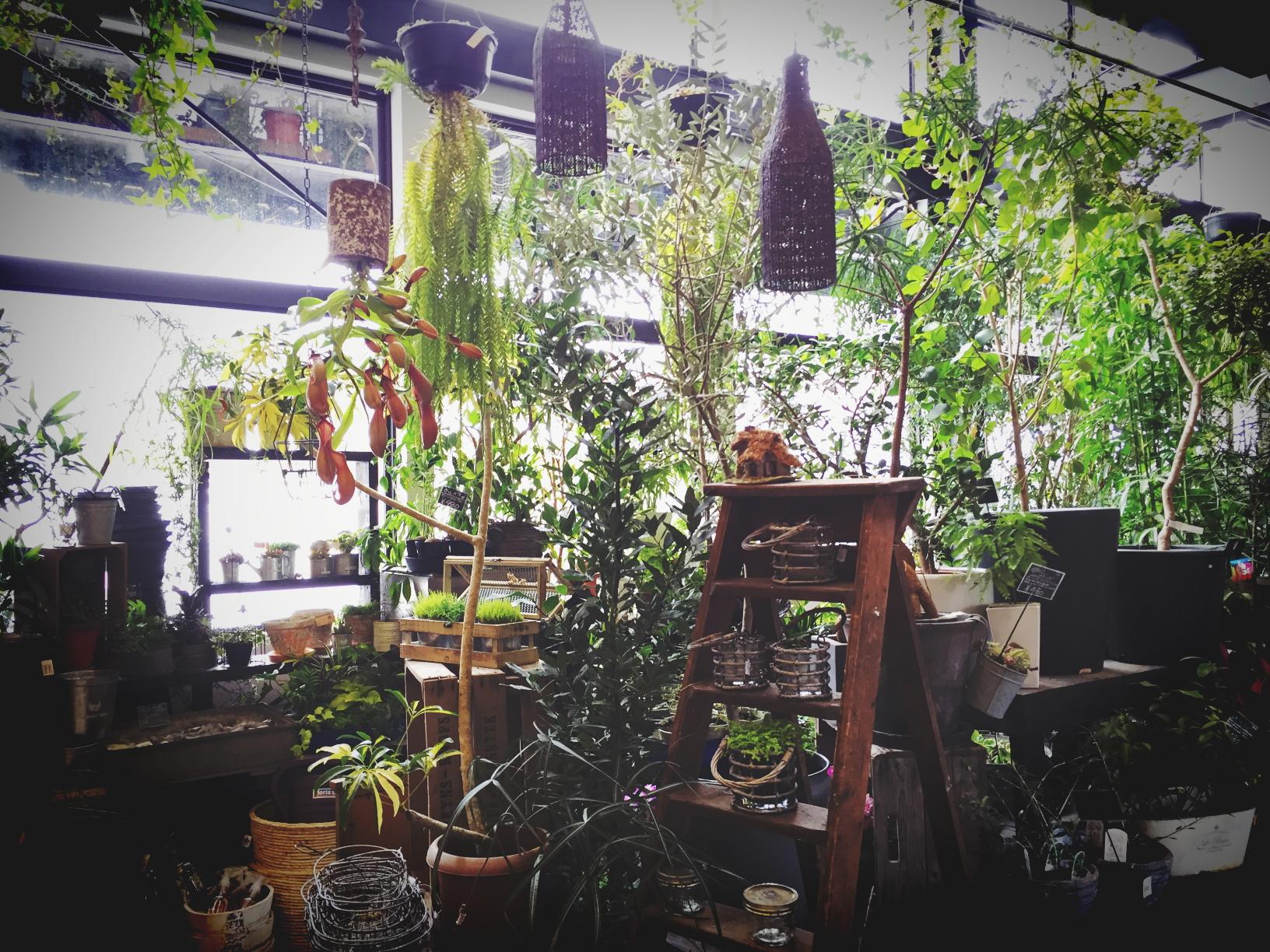 札幌市中央区に店舗を構える花屋 FlowerSpaceGravel フラワー スペース グラベルのHPです。 慶弔用花束・アレンジメントフラワー・スタンド花・観葉植物・鉢花・ ガーデニング・ブライダルなど幅広く取り扱いしております。